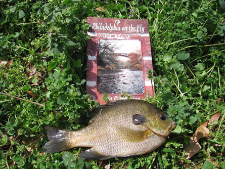 GA Bluegill PA Book